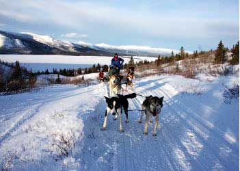 Yukon Husky Adventure Tour